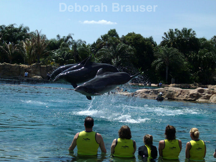 Jumping dolphins at Discovery Cove in Orlando, Florida